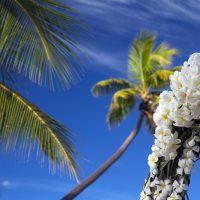 fiji-wedding-arch-flowers-frangipani