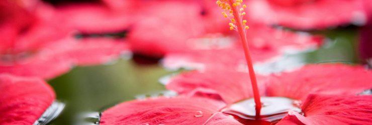 fiji wedding flowers